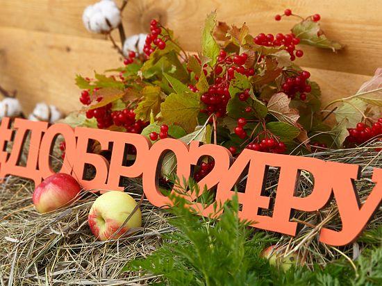 Красноярцев приглашают на праздник «Вовка-морковка»