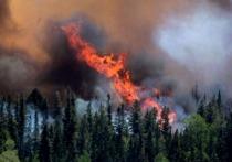 Счётная палата Красноярского края подсчитала количество лесных пожаров