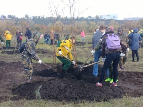 Красноярцы присоединились к акции «Живи, лес!»